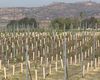 Ramona Seeks To Move Up The Vine As A Wine Tasting Region