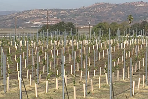Tease photo for Ramona Seeks To Move Up The Vine As A Wine Tasting Region