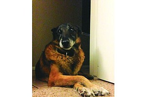 Marine Family Grieves Over Death Of Retired Military Dog ...