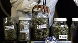 Medical Marijuana Regulation To Be Reviewed By San Diego ...