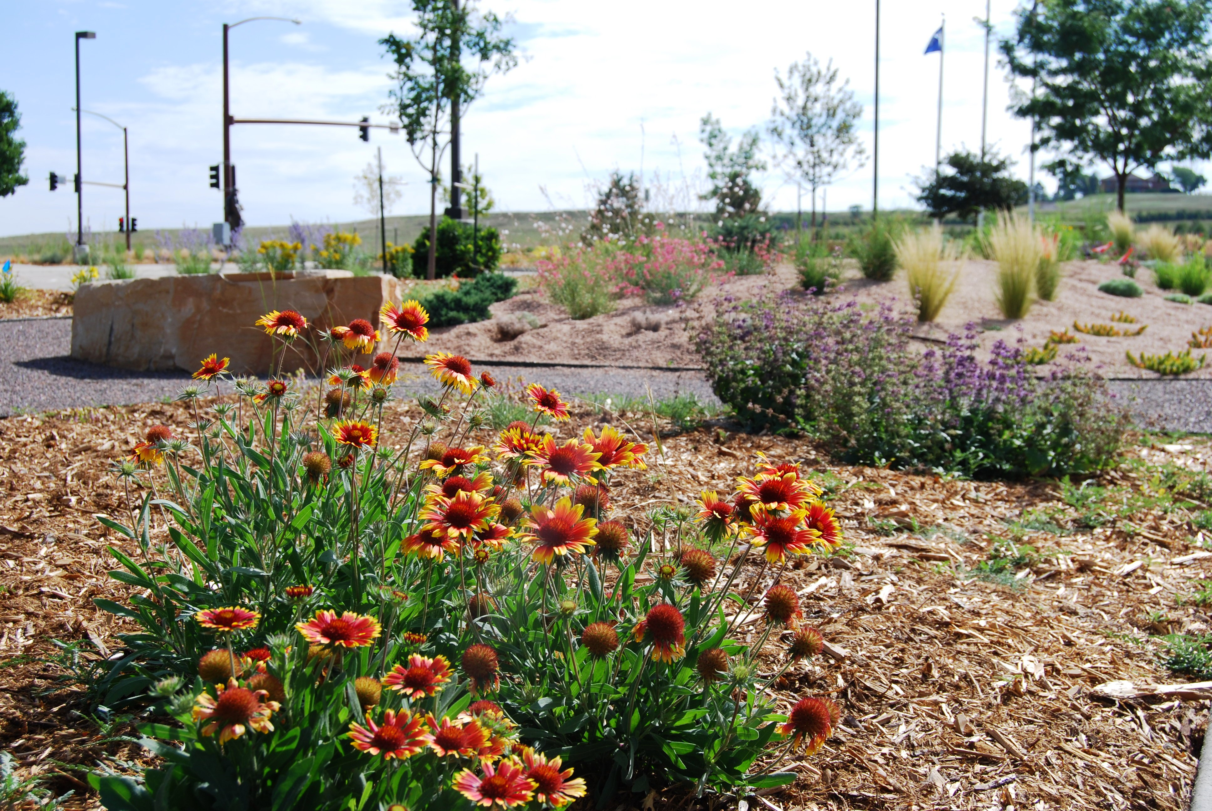 California Drought Feeds Interest For Water Wise Landscaping In San Diego Kpbs