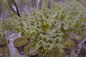 San Diego City Council To Decide Again On Medical Marijua...