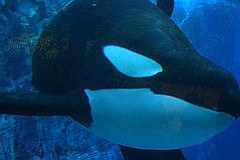 ACLU Sues Over Rejection Of Anti-SeaWorld Ad At San Diego...