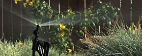 San Diego Water Managers Target Grass Lawns For Water Con...