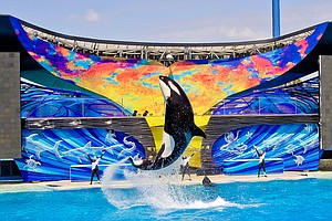 PETA's Anti-SeaWorld Poster To Go Up At Lindbergh Field