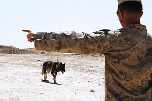 Tease photo for 3 US Troops, 1 Military Dog Killed In Afghanistan