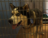 Fireworks Send Nearly 100 Dogs Running For Shelters During Fourth O...
