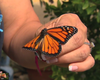Our Wild San Diego: Insects & Water Conservation