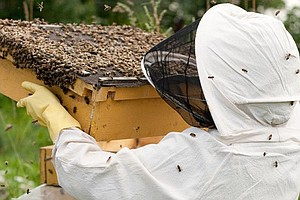 Tease photo for County Supervisors Approve $50K For Beekeeping Study