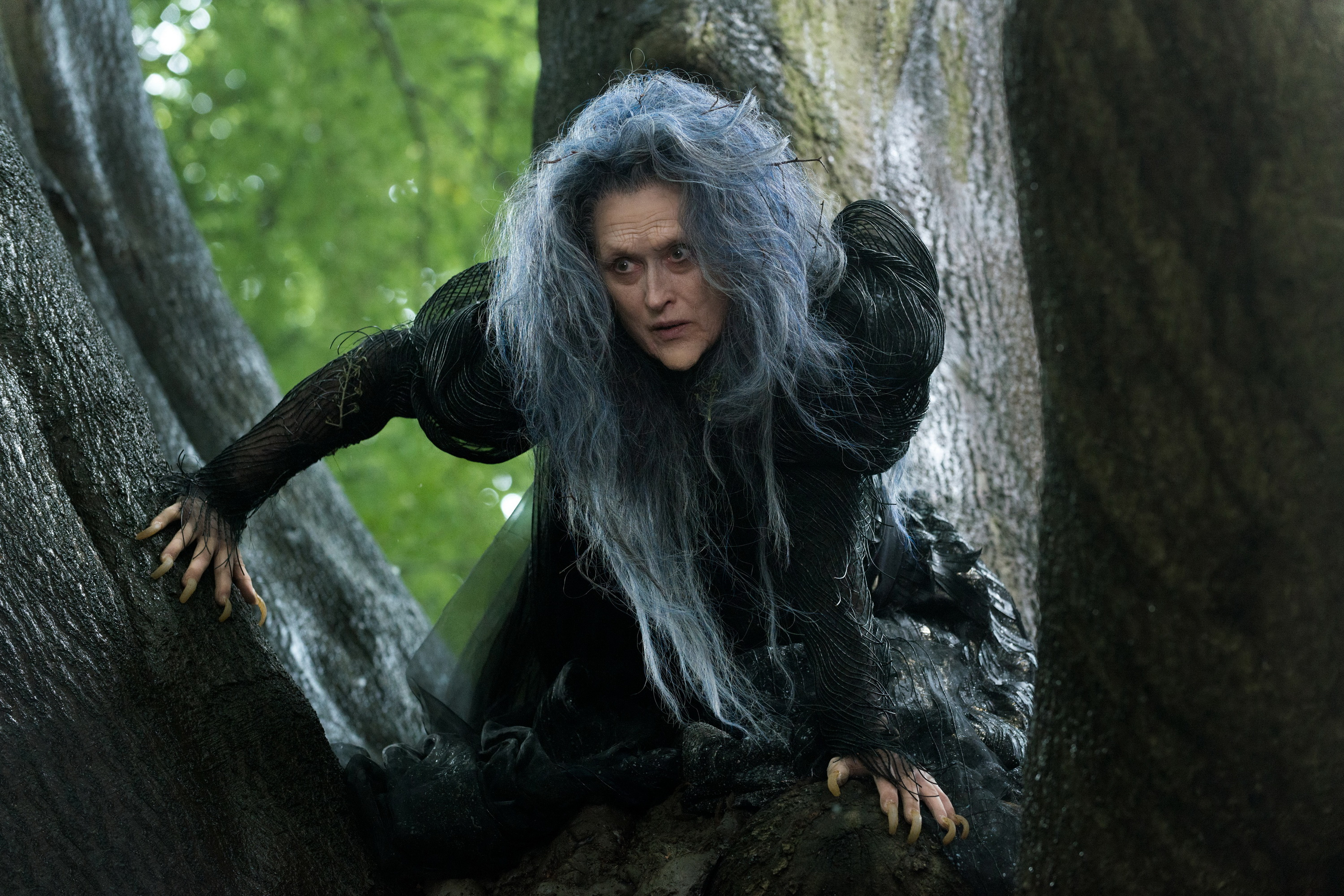 Don 39 T Go 39 Into The Woods 39 Kpbs