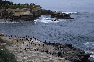 Tease photo for Judge Confirms Ruling Tossing La Jolla Odor Lawsuit