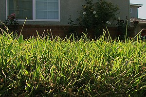 Drought Drives Some San Diegans To Go Grass-Free