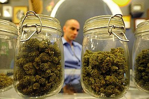 Competing San Diego Med Pot Co-Op Applicants Cause Openin...