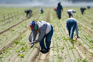 Tease photo for Baja California Farmworkers, Growers Agree On Pay Raise