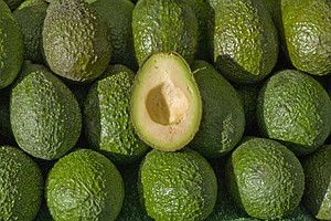 Save the Guacamole: New Planting Method Offers Hope To Sa...