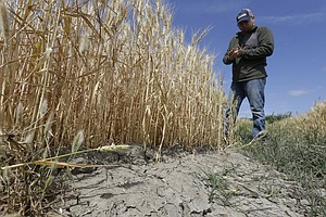 Tease photo for California Orders Large Water Cuts For Farmers