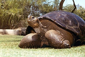 Tease photo for 'Speed,' Galápagos Tortoise Who Came To San Diego In 1933, Dies At 150