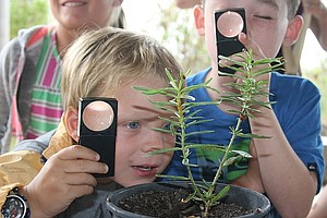 Tease photo for Children Learn About Ladybugs At San Elijo Lagoon