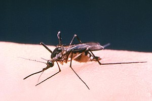 Tease photo for Del Mar Man Contracts West Nile Virus
