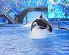 Coastal Commission To Vote On SeaWorld Killer Whale Tank Project