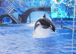 Coastal Commission To Vote On SeaWorld Killer Whale Tank ...