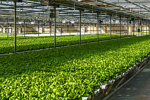 Agricultural Production In San Diego County Declines In O...