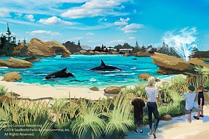 Tease photo for SeaWorld's Plan To Expand Orca Tanks To Be Considered By Coastal Commission
