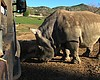 Public Mourns Death Of Rare Rhino In San Diego