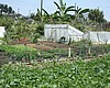 City Council Approves Proposal Incentivizing Urban Agriculture