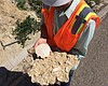Fossils Unearthed Along State Route 15 in San Diego