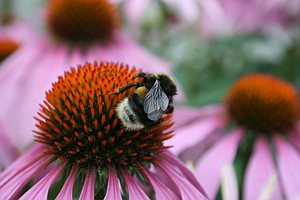 San Diego NAT Hosts Event On Importance Of Bees