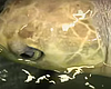 Tease photo for Recovering Sea Turtles Flown From Seattle To San Diego