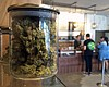 Tease photo for Temporary Ban On Pot Shops In Unincorporated San Diego County Extended