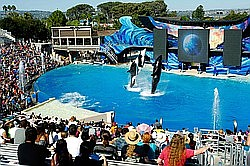 PETA To Announce Plan For Orca Seaside Sanctuaries