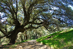 San Diego's Best Hiking Trails And Tips For Newbie Hikers