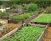 San Diego Food Bank Turns Food Waste Into Compost For Community Gar...