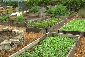 San Diego Food Bank Turns Food Waste Into Compost For Com...