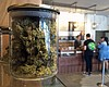 Proposed Pot Tax Would Generate $22M For San Diego In First Year, C...