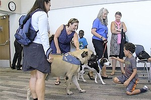 Love On A Leash: Therapy Dogs Spread Love Throughout San ...