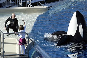 Gov. Brown Signs Bill Banning SeaWorld Orca Shows