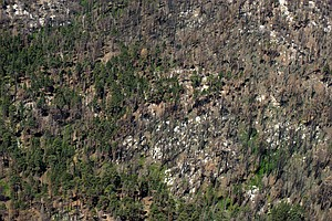 San Diego's Forests Face Possible Extinction