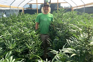 How Will Small Marijuana Growers Stay Competitive If Cali...