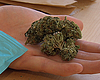 San Diego Measures Tackle Marijuana Tax, Probationary Periods, Oust...