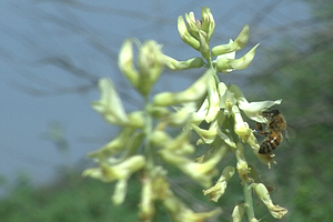 Tease photo for Insects May Help San Diego Researchers Track Climate Change