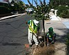Trees Could Help Clean San Diego's Air
