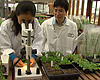 Salk Researchers Say Plant May Hold Key To Drought Resistance