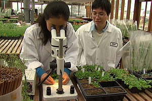 Salk Researchers Say Plant May Hold Key To Drought Resist...