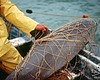 Mexico Plans To Catch, Protect Last Few Vaquita Porpoises