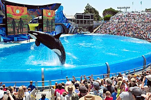 SeaWorld San Diego To Have Last Orca Show Sunday