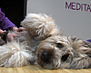 San Diego Class Shows Dogs Are Naturals At Meditation